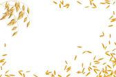 三个茎和燕麦谷物的框架 — 图库照片
