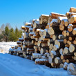 Stock Photo: Timber pile in snow