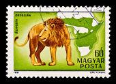 Markeren met een foto van een leeuw — Stockfoto