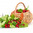 Hawthorn in a basket — Stock Photo