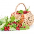 Hawthorn in a basket - Stock Photo