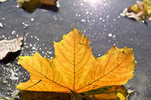 Autumn puddles — Stock Photo