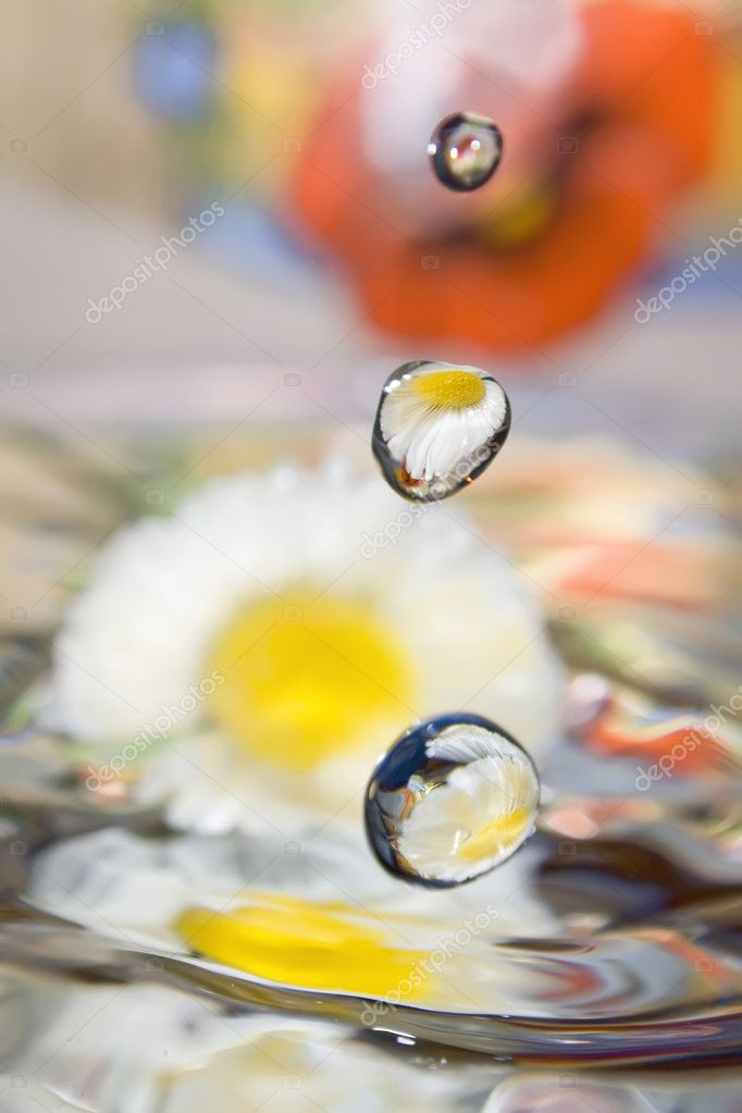 Water dropped against floral background.  Stock Photo #8347951