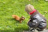Feeding squirrel — Stock Photo