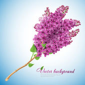 Blooming lilacs — Stock Vector