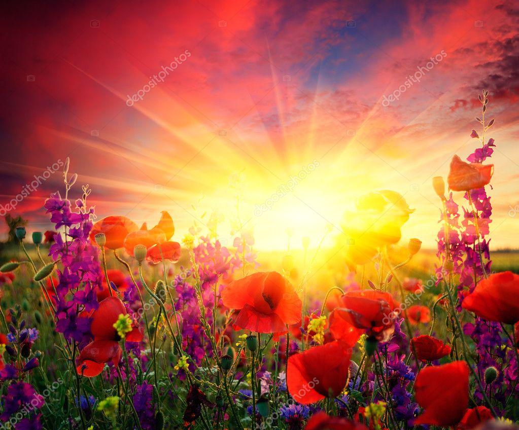 Фотообои Поле цветущих маков