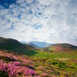 Spring landscape with the cloudy sky and Flower — Stock Photo #8104011
