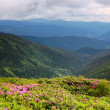 Spring landscape with the cloudy sky and Flower — Stock Photo