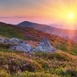 Summer landscape in mountains with the sun. — Stock Photo