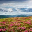 Spring landscape with the cloudy sky and Flower — Stock Photo #9910450