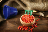 Corn sowing seed — Stock Photo