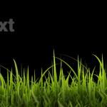 zelené trávě panorama izolovaných na černém pozadí. vysoké rozlišení. 3D obrázek — Stock fotografie