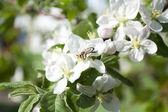Blommande blommor på grenar — Stockfoto