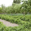 Stock Photo: Farmer vegetable garden in spring