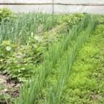 Farmer vegetable garden in spring — Stock Photo