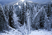 зимний мех-дерево — Стоковое фото