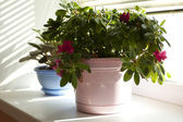 Beautiful flowerpot on a window — Stock Photo