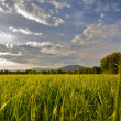 Stock Photo: Countryside landscape