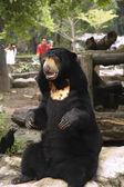 Animals in Zoo — Stock Photo