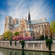 Stock Photo: Notre dame de Paris - France