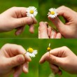 Daisy flower in a child hand — Stock Photo