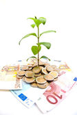 Young plant growing from coins — Stock Photo