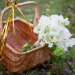 Stock Photo: White bridal bouquet in a basket