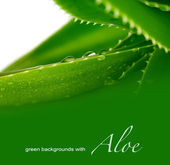 Background with aloe — Stock Photo