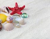 Sea shells on sand — Stock Photo