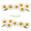 Chamomile background — Stock Photo #9540282