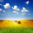 Haystack on the meadow in summer — Stock Photo #9540464