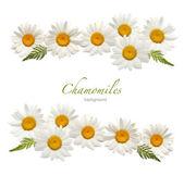 Chamomile background — Stock Photo
