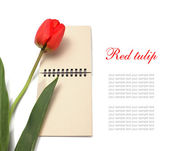Red tulip and notepad — Stock Photo