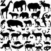 Grand zoo — Vecteur