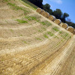 Agricultural landscape of hay - Stock Photo