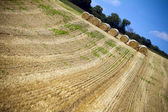 Agricultural landscape of hay — Stock Photo