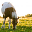 Horse in the morning light — Stock Photo