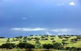 Floresta mediterrânica de carvalhos — Foto Stock