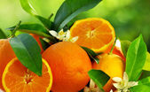 Orange fruits and flowers — Stock Photo