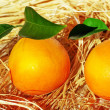 Oranges and lemons, fresh citrus fruits - Stock Photo