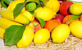 Zitrusfrüchte, bananen und äpfel — Stockfoto