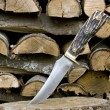 Stock Photo: Vintage bone handle knife