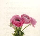 Arkadan aydınlatmalı bahar çiçekleri eski komut dosyası hakkında — Stok fotoğraf