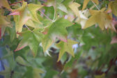 Deciduous leaves — Stockfoto