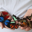 Many butterflies on a man's hands — Stockfoto