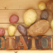 Potato varieties — Stock Photo