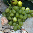 Stock Photo: Mediterranean: grapes, figs and shells