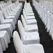 Rows of white chairs — Stock Photo
