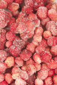 Frozen wild strawberry background — Stock Photo