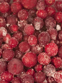 Frozen cranberry background — Stock Photo
